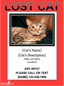 FREE lost Cat Flyer Template (without REWARD)