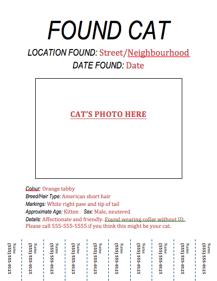 Found Cat Flyer  Lost Pet Poster Template