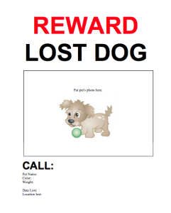Elegant #18 U2013 Lost And Found Dog Flyer Pictures